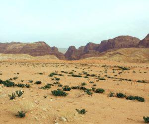 Jordania na tydzień – co warto zobaczyć, jak zorganizować wyjazd