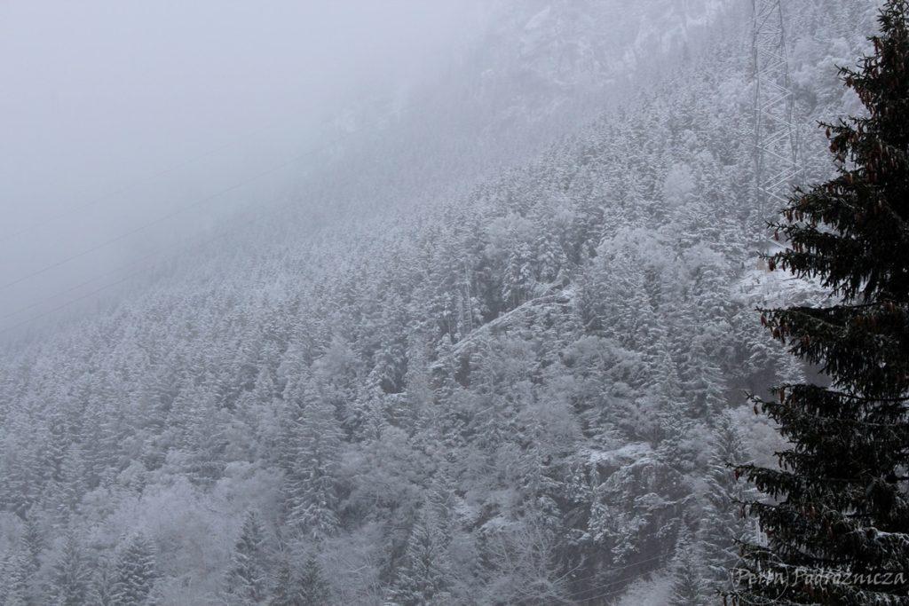 Świeży śnieg okrywający las iglasty na zboczach gór