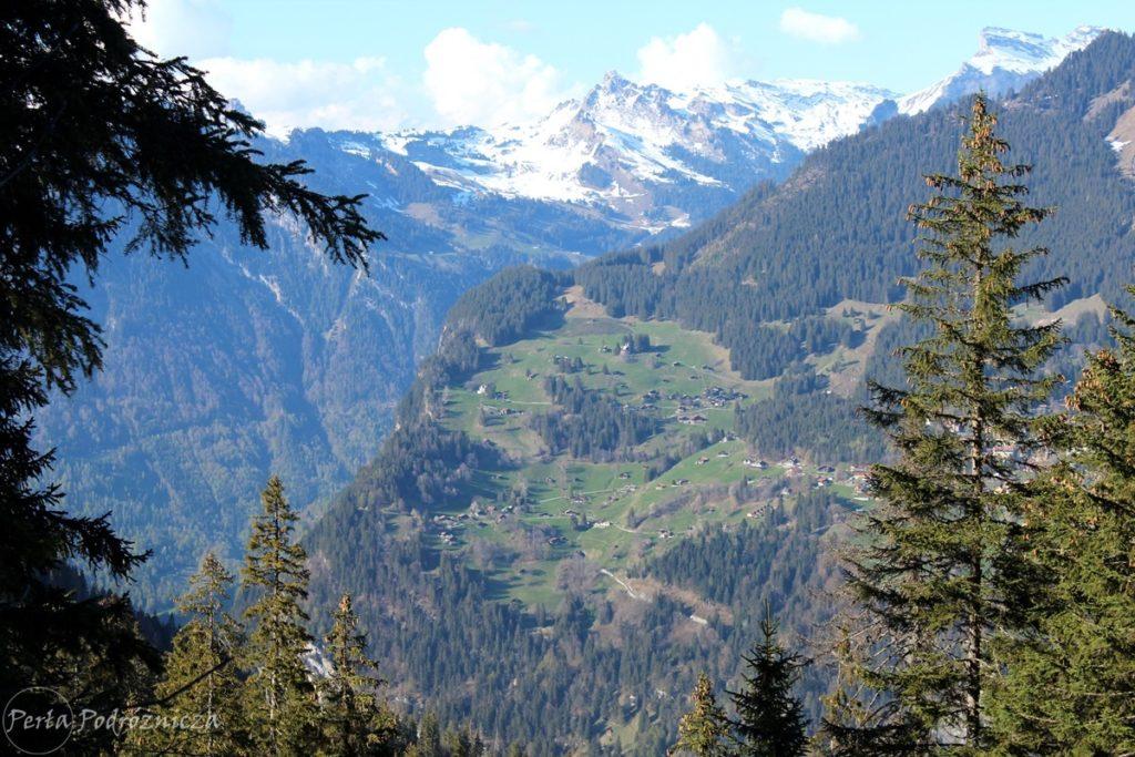 Domki zlokalizowane na zboczach góry, wśród lasu i pastwisk